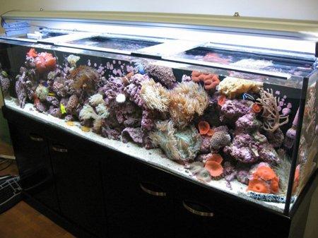 светильник в акварируме
