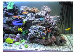 обслуживание и чистка аквариумов в Москве